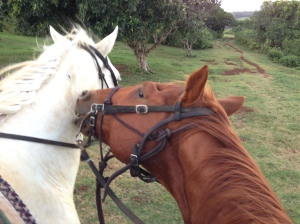 Possible horse drama. Ouch!
