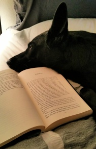 DoggoLovesBooks.jpg
